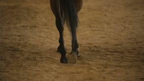 Οπλές αλόγων κόλπων που περπατούν στην άμμο, hippotherapy επεξεργασία, οδήγηση πλατών αλόγου απόθεμα βίντεο