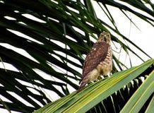 Οπτική επαφή με ένα αρπακτικό πτηνό στοκ εικόνα