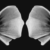 Οπτική παραίσθηση - δύο πρόσωπα ή ένας κάλυκας Στοκ Εικόνες