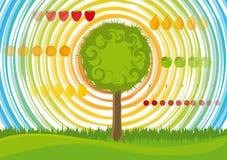 οπωρωφόρα δέντρα απεικόνιση αποθεμάτων