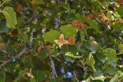 Οπωρωφόρο δέντρο Στοκ Εικόνες