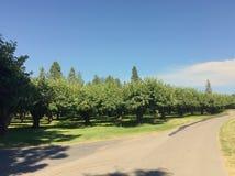Οπωρώνας δέντρων κερασιών και στρωμένος δρόμος Στοκ Φωτογραφίες