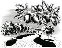 Οπωρώνας και μήλα απεικόνιση αποθεμάτων