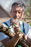 οπωρώνας κηπουρών κοπής κ&l Στοκ Φωτογραφίες