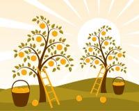 οπωρώνας μήλων απεικόνιση αποθεμάτων