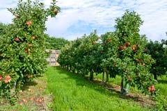οπωρώνας μήλων Στοκ Εικόνες