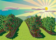 Οπωρώνας με τα δέντρα μηλιάς διανυσματική απεικόνιση