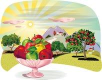 Οπωρώνας με τις σειρές των δέντρων μηλιάς και του μήλου χτυπήματος κύπελλων φρούτων απεικόνιση αποθεμάτων