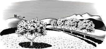 Οπωρώνας που φυτεύεται με το δέντρο μηλιάς ελεύθερη απεικόνιση δικαιώματος