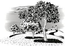 Οπωρώνας που φυτεύεται με το μήλο ελεύθερη απεικόνιση δικαιώματος