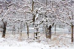 Οπωρώνας της Apple που καλύπτεται με το χιόνι Στοκ Εικόνες