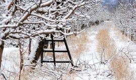 Οπωρώνας της Apple που καλύπτεται με το χιόνι Στοκ φωτογραφία με δικαίωμα ελεύθερης χρήσης