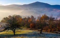 Οπωρώνας της Apple στα βουνά στην ανατολή φθινοπώρου Στοκ φωτογραφία με δικαίωμα ελεύθερης χρήσης