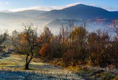 Οπωρώνας της Apple στα βουνά στην ανατολή φθινοπώρου Στοκ φωτογραφίες με δικαίωμα ελεύθερης χρήσης