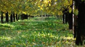 Οπωρώνας της Apple το φθινόπωρο Στοκ εικόνες με δικαίωμα ελεύθερης χρήσης