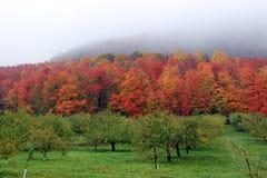 Οπωρώνας το φθινόπωρο στοκ φωτογραφία με δικαίωμα ελεύθερης χρήσης