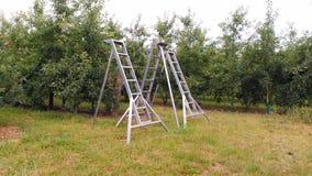 Οπωρώνας τρία μεταλλικές σκάλες μήλων Στοκ Φωτογραφία
