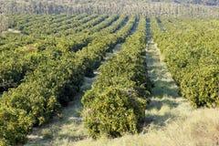 Οπωρώνας φρούτων Στοκ φωτογραφίες με δικαίωμα ελεύθερης χρήσης