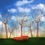 οπωρώνας φύλλων καρπών κλάδων μήλων μήλων ελεύθερη απεικόνιση δικαιώματος