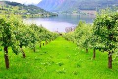 οπωρώνας φύλλων καρπών κλάδων μήλων μήλων Στοκ Φωτογραφίες