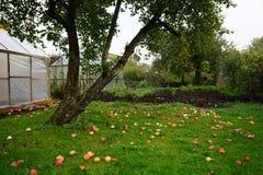 οπωρώνας φύλλων καρπών κλάδων μήλων μήλων Στοκ φωτογραφίες με δικαίωμα ελεύθερης χρήσης