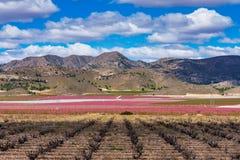 Οπωρώνες στην άνθιση Μια άνθηση των οπωρωφόρων δέντρων Cieza, Murcia Ισπανία στοκ φωτογραφία