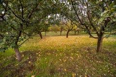 Οπωρώνες της Apple το φθινόπωρο Στοκ εικόνες με δικαίωμα ελεύθερης χρήσης
