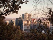Ορίζοντας του Μόντρεαλ, με τον πύργο Scotia στους επιχειρησιακούς ουρανοξύστες μετώπων & CBD που περιβάλλονται από τα δέντρα που  στοκ εικόνες με δικαίωμα ελεύθερης χρήσης