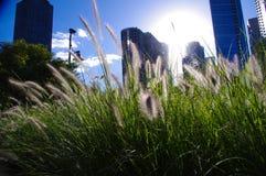 Ορίζοντας του Σικάγου στη χλόη στοκ εικόνα