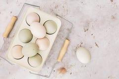 Οργανικά αυγά των κοτών araucana στον κάτοχο μετάλλων Στοκ Εικόνες