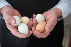 Οργανικά αυγά Araucana Στοκ φωτογραφία με δικαίωμα ελεύθερης χρήσης