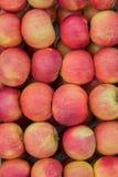 Οργανικά κόκκινα και κίτρινα μήλα στο υπόβαθρο κλουβιών Στοκ φωτογραφία με δικαίωμα ελεύθερης χρήσης