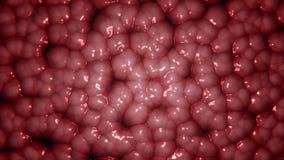 Οργανικά κύτταρα που βράζουν - βίντεο περιτύλιξης για τη σύσταση ή το υπόβαθρο διανυσματική απεικόνιση