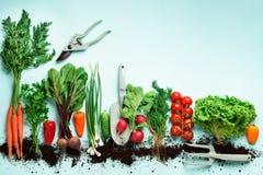 Οργανικά λαχανικά και εργαλεία κήπων στο μπλε υπόβαθρο με το διάστημα αντιγράφων Τοπ άποψη του καρότου, τεύτλο, πιπέρι, ραδίκι, ά στοκ φωτογραφίες με δικαίωμα ελεύθερης χρήσης