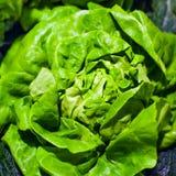 οργανικά λαχανικά φρέσκο ιαπωνικό λαχανικό σαλάτας τροφίμων Μαρούλι για την κατασκευή μιας σαλάτας Στοκ Φωτογραφία