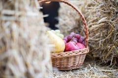 Οργανικά μήλα και αχλάδια σε ένα καλάθι υπαίθρια μεταξύ sheaves του σανού Κήπος φθινοπώρου Στοκ Φωτογραφίες