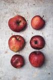 Οργανικά μήλα στοκ εικόνες