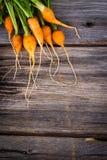 Οργανικά μικροσκοπικά καρότα οικογενειακών κειμηλίων Στοκ φωτογραφία με δικαίωμα ελεύθερης χρήσης