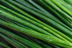 Οργανικά πράσινα κρεμμύδια, μακροεντολή πράσινα λαχανικά Στοκ Φωτογραφία