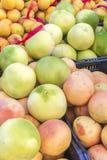 Οργανικά φρούτα και λαχανικά στην αγορά αγροτών: Πάρκο του Wilson, Τ Στοκ Φωτογραφίες