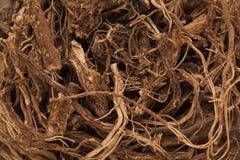Οργανικές ινδικές Coleus (barbatus Plectranthus) ρίζες Στοκ εικόνες με δικαίωμα ελεύθερης χρήσης