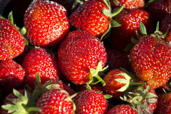 οργανικές φράουλες Στοκ φωτογραφία με δικαίωμα ελεύθερης χρήσης