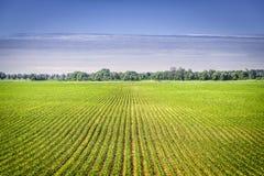 Οργανική γεωργική γη με τις σειρές Στοκ φωτογραφία με δικαίωμα ελεύθερης χρήσης