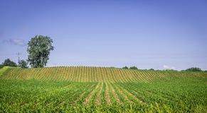 Οργανική γεωργική γη με τις σειρές Στοκ Φωτογραφία