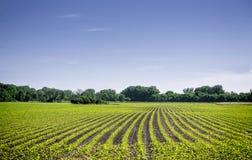 Οργανική γεωργική γη με τις σειρές Στοκ εικόνα με δικαίωμα ελεύθερης χρήσης