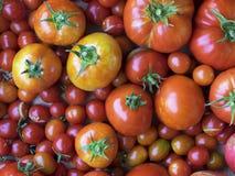 οργανική ντομάτα Στοκ φωτογραφίες με δικαίωμα ελεύθερης χρήσης