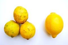 Οργανική τροφή εναντίον των τροφίμων ΓΤΟ: λεμόνια Υγιής και ανθυγειινή έννοια Στοκ εικόνες με δικαίωμα ελεύθερης χρήσης