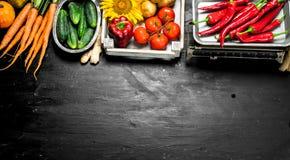 Οργανική τροφή Λαχανικά σε ένα κιβώτιο και καυτά πιπέρια τσίλι στις κλίμακες Στοκ εικόνες με δικαίωμα ελεύθερης χρήσης