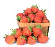 οργανική φράουλα Στοκ φωτογραφία με δικαίωμα ελεύθερης χρήσης