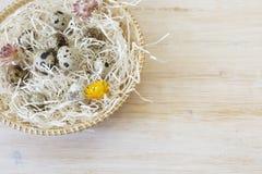 Οργανική φωτογραφία αυγών ορτυκιών Στοκ Φωτογραφίες